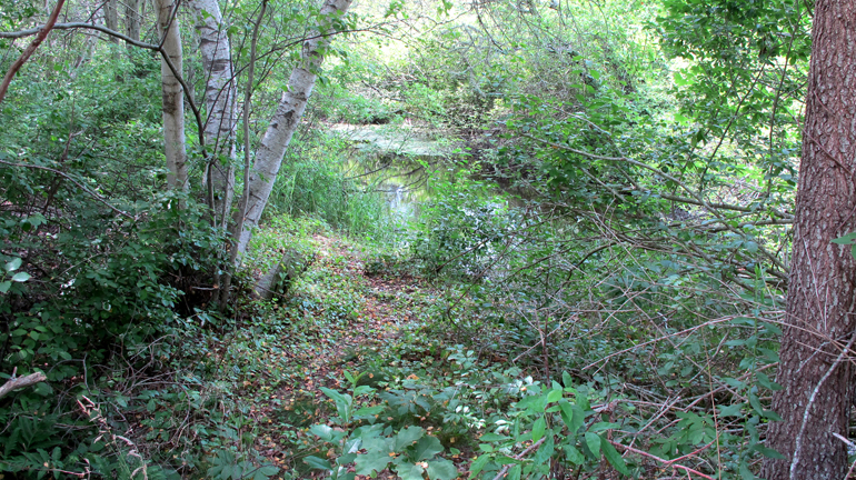 17 Location2-upstream
