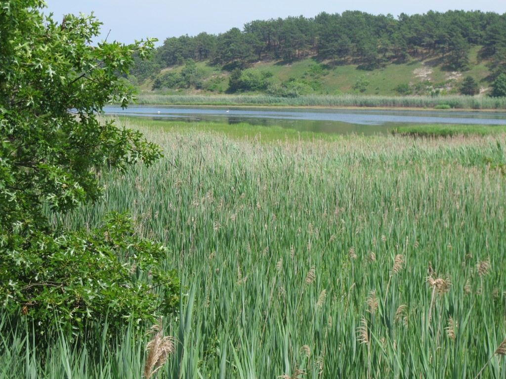 38Looking near the dike