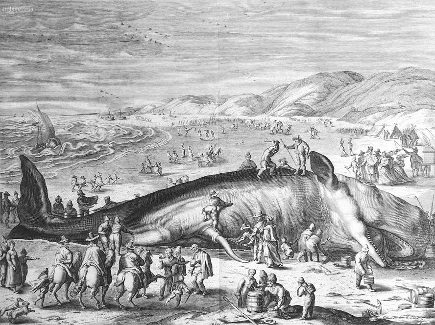 Im_Februar_1598_an_der_holländischen_Küste_gestrandeter_Walfisch