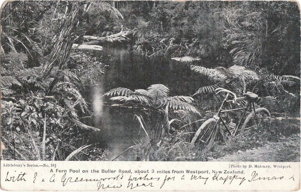 4Buller Road fern pool by D. Mahoney, 1905